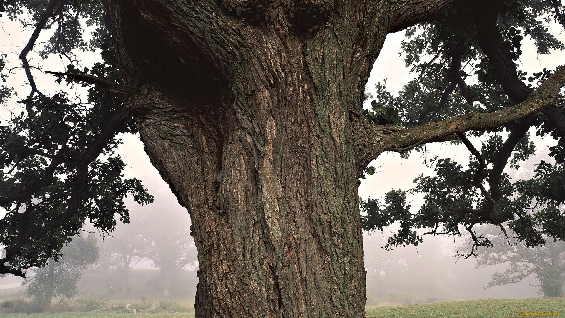 фотография вживленная в дерево картинки
